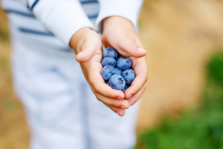 Love blueberries but hate how messy they can get? No worries! This tip will teach you how to get blueberry stains out of clothes FAST so you and your kids can eat as much blueberry pie as your heart desires without worrying you'll ruin your favorite clothes in the process.