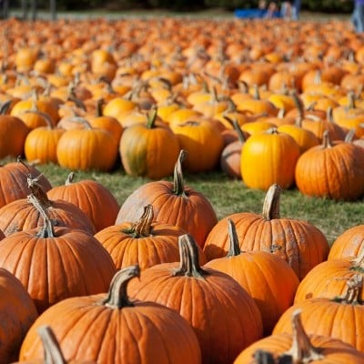 10 Unique Pumpkin Carving Ideas Your Kids Will Love